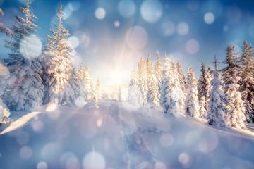 Wall Mural - Calm winter landscape in the morning. Bokeh light effect.