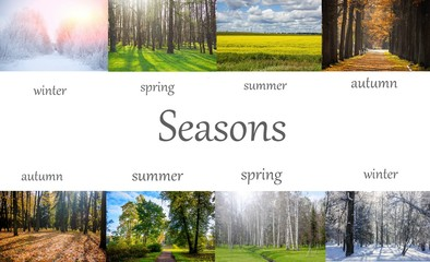 Collage seasons . All season. Seasons in one photo. Winter spring summer autumn. Tree branch. Grass with dew. Nature. Fotomurales