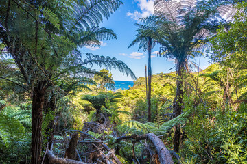 Picture of endemic rainforest on north island of New Zealand in summer