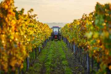 Papiers peints Vignoble Autumn rows of vineyards with tractor