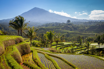 Garden Poster Rice fields scenic view of balinese rice terraces and volcano in bali indonesia