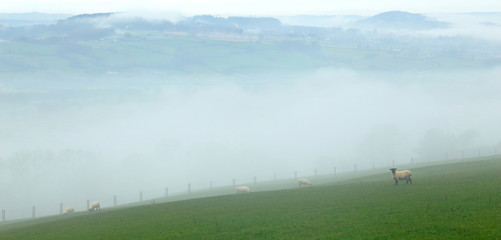 Wall Mural - Foggy morning in Axe Valley, East Devon seen from Musbury Hill