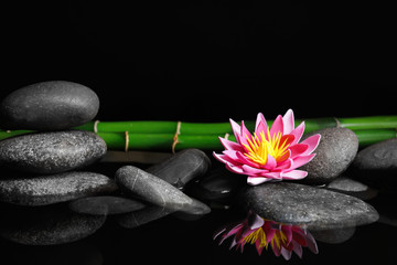 Beautiful zen garden with lotus flower and pond on black background. Space for text