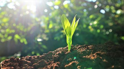 Deurstickers Bloemen Avocado seedlings growing in the morning sunshine
