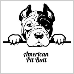 American Pitbull - Peeking Dogs - breed face head isolated on white