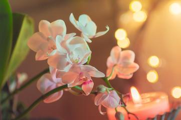 Acrylic Prints Orchid Orchidee Dekoration mit Lichtpunkten
