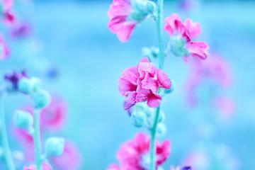 Fond de hotte en verre imprimé Univers wild red field flowers,cosmos flowers