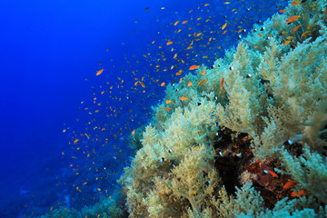 Fototapete - Beautiful coral reef and fish