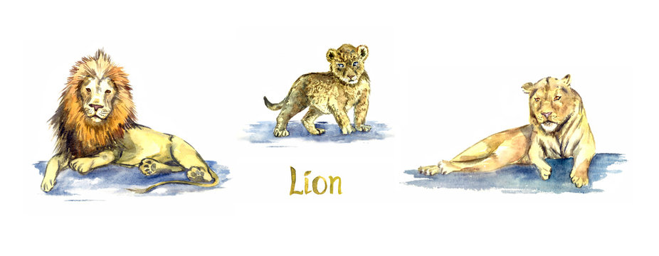 Lion family collection, lion, cub and lioness, handpainted watercolor illustration isolated on white, element for design