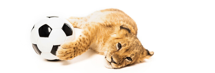 cute lion cub near soccer ball isolated on white, panoramic shot Wall mural
