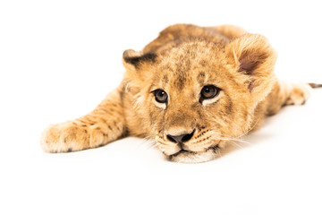 Wall Murals Lion adorable lion cub lying isolated on white