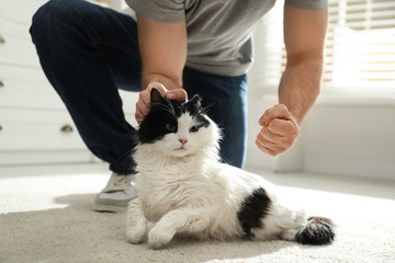 Man beating cat at home, closeup of hands. Domestic violence against pets