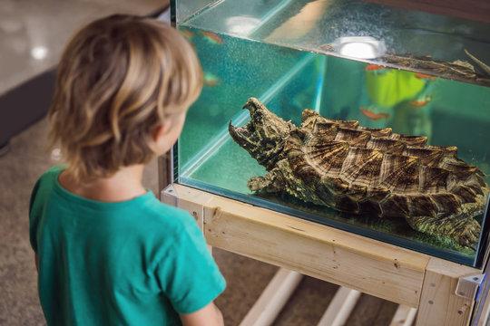 Little kid boy admire big turtles in terrarium through the glass