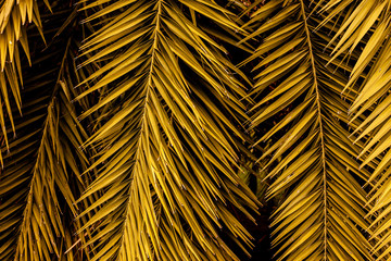 Wall Mural - abstract colorful leaf texture, nature background, tropical leaf