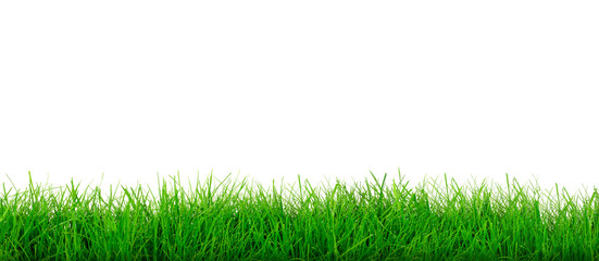 Wide natural green grass meadow on a white background in close-up with copy space for your...