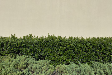 wall with green plants