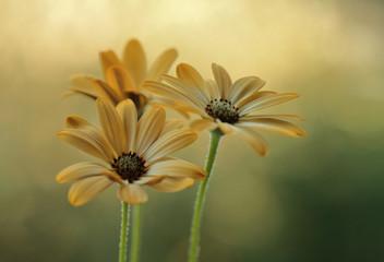Obraz Żółte letnie kwiaty - fototapety do salonu