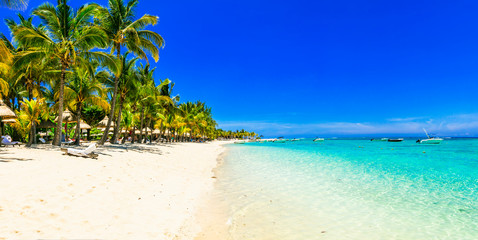 Idyllic tropical island. beach scenery with palm trees and turquoise sea