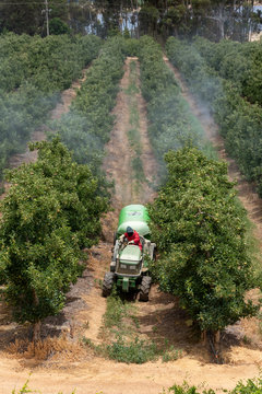 Elgin, Western Cape, South Africa, December 2019. Spraying apple trees in the fruit producing area close to Elgin ajoining the Theewaterskloof Dam, Western Cape