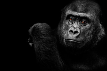 Photo sur Plexiglas Singe A gorilla who thinks
