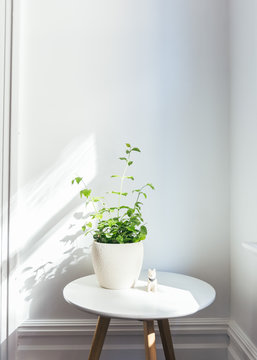 Green plants with prop on white table in bright bedroom