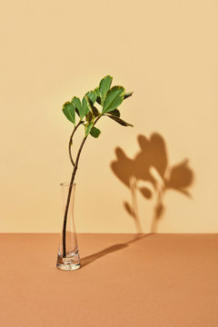 Transparent vase with a branch of green leaves and shadows on a beige brown background with copy space. Creative layout for postcards