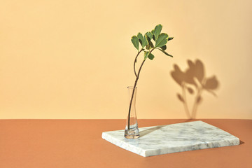 Green branch in a transparent vase on a gray marble board presented on a beige brown background with copy space. Creative composition