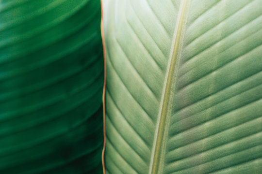 Detailed View Of Vibrant Green Tropical Leaves