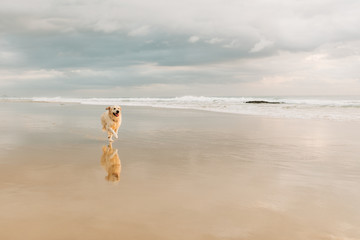 A dog runs along the beach in front of a storm