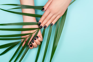 Fototapeten Maniküre Black manicure with palm leaf on blue background