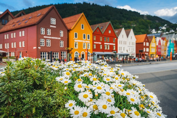 Wall Murals Northern Europe Multicolored flowers growing at the Bryggen - Hanseatic wharf in Bergen, Norway.
