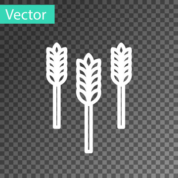 White line Cereals set with rice, wheat, corn, oats, rye, barley icon isolated on transparent background. Ears of wheat bread symbols. Vector Illustration