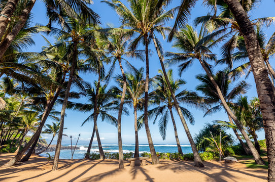 Lots of palm trees with the ocean in the background in Maui