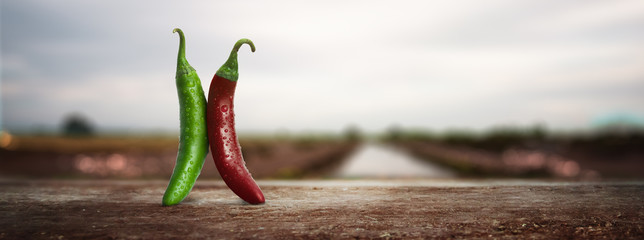 Zelfklevend Fotobehang Hot chili peppers panoramic - Fresh red and green Mexican chillies