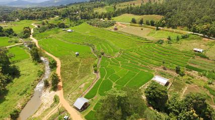 Foto op Canvas Pistache The beautiful landscape of rice fields in Thailand.