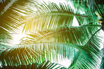 Wall Mural - Coconut palm leaves perspective view , tropical palm leaves background