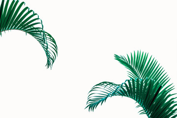 Tuinposter Palm boom coconut leaf isolated on white background