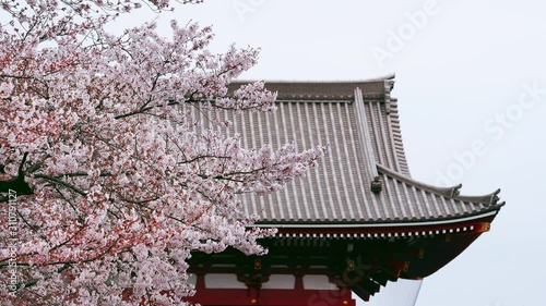 Wall mural Cherry blossoms and temple roof in Tokyo, Japan.