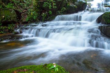 Foto op Canvas waterfall in forest