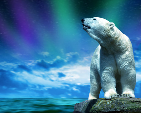 Polar bear stand on the rock in the middle of the sea. Change climate or global warming theme.