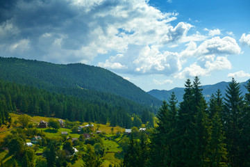 Poster Groen blauw beautiful summer landscape, spruces on hills, cloudy sky and wildflowers - travel destination scenic, carpathian mountains