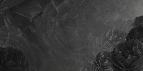 Abstract blur rose and black background,wallpaper,name card, copy space