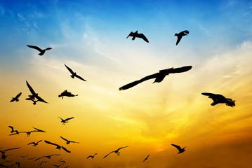 Foto auf AluDibond Orange silhouette birds on colorful sky on blur image, soft dream image