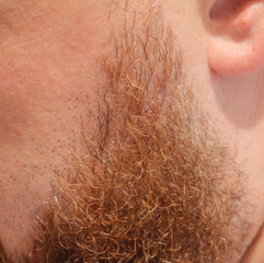 Thick beard hair in a man