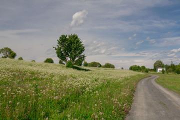 Kizhi. rural landscape