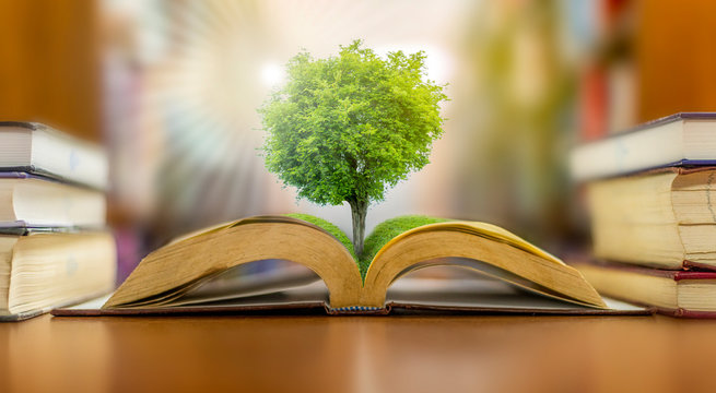 The concept of education in the world, Earth Day or environmental protection, the hand to protect the growing forest