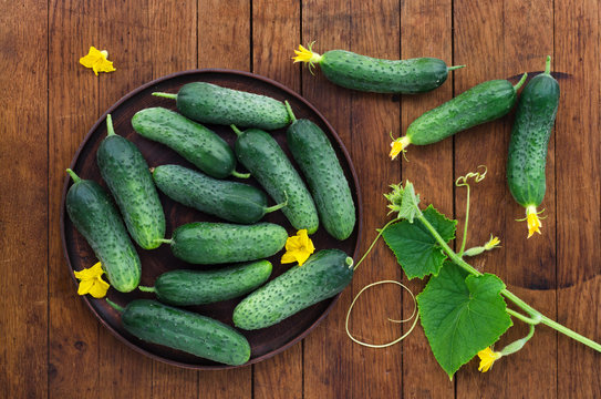 Fresh cucumbers on wooden table.