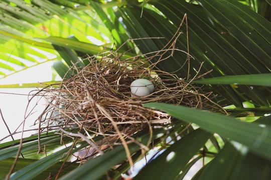 closeup of bird's nest on tree