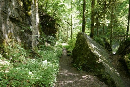 Wanderweg in der Gauchachschlucht im Schwarzwald