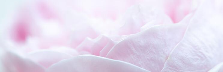 In de dag Roses Pink roses soft focus in pastel colors for banner for website, Valentine's day card,Wedding card background